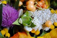 Very pretty flower Stock Photos