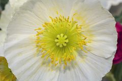 Very pretty spring flower in the sunshine Stock Photos