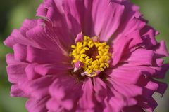 Very pretty summer flower close up in my garden Stock Photography