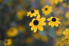 Beautiful yellowl summer flowers close up in my garden Stock Photos