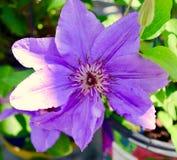 Very purple Stock Photo