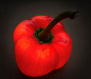 Very red bellpepper, sweet pepper. Capsicum annuum. Stock Photography
