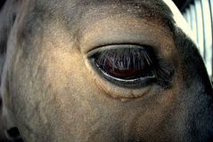 Horse eye. Very sad horse and his sad eye Royalty Free Stock Photo