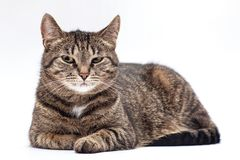 Very sad and offended cat. Royalty Free Stock Photo
