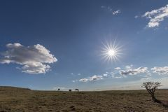 A very sharp sun star in the blue sky, with some horses on the l. Eft and a plant on the right, on top of a mountain royalty free stock photos