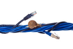 Very slow internet. Snails moving on twisted lan cables Stock Images
