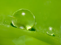 Very small Dew on green leaf with drops of water Royalty Free Stock Photography
