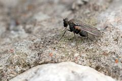 Very small fly on the rock Stock Photos