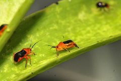 Very small insect on nature Royalty Free Stock Image