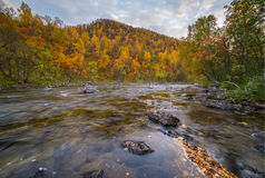 Very small river in autumn. Very small river with autumn colors Stock Image