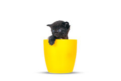 Very small sad kitten in pots on a white background. Royalty Free Stock Photos