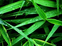 Small parts of water on the plants after rain stock image