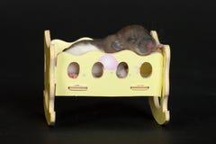 Healthy sleep Stock Image