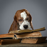 Very smart dog Royalty Free Stock Photography
