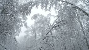 Heavy snow falling in the forest. Very strong and beautiful blizzard in the forest, winter scene stock video