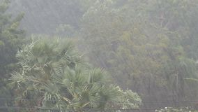 Very strong tropical rain shower wall. Palm trees and trees in rain. Very strong tropical rain shower wall. Palm trees and trees in the rain stock video footage