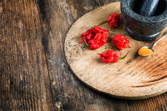 Very strongly hot pepper Carolina Reaper Stock Image