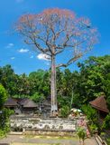 Very tall tree with Pink flower and Balinese roofs at Goa Gajah Temple Bali stock photo