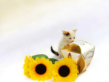 Very tasty sweets. White licking lips kitten,box of sweets and three yellow flowers on a light background Royalty Free Stock Image