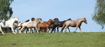 Very various barch of horses running on pasturage Royalty Free Stock Photos