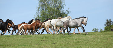 Very various barch of horses running on pasturage Royalty Free Stock Photo