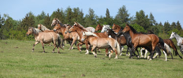 Very various barch of horses running on pasturage Royalty Free Stock Photography