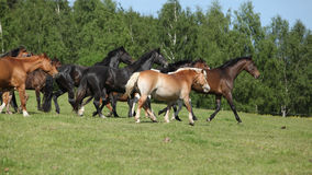 Very various barch of horses running on pasturage Royalty Free Stock Images