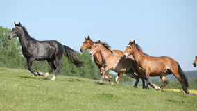 Very various barch of horses running on pasturage Stock Photo