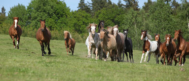 Very various barch of horses running on pasturage Stock Image