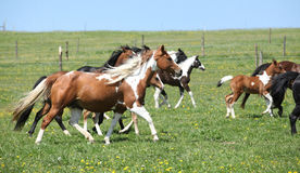 Very various batch of horses running on pasturage Royalty Free Stock Photography