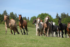 Very various batch of horses running on pasturage Stock Photo