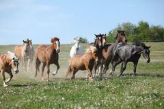 Very various batch of horses running on pasturage Stock Photos