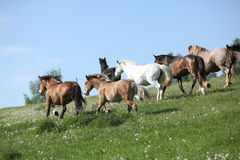 Very various batch of horses running on pasturage Stock Images