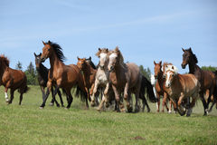 Very various batch of horses running on pasturage Stock Image