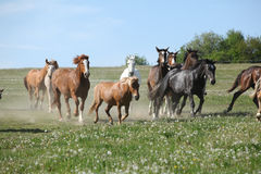 Very various batch of horses running on pasturage Royalty Free Stock Photo