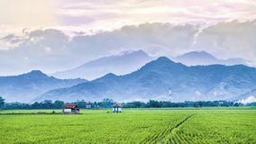 Very vast, broad, extensive, spacious rice field, streched into the horizon. And also two huts in the middle of rice field.  Behind it is a line of hills and Royalty Free Stock Photography