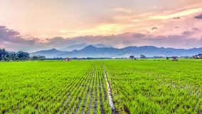 Very vast, broad, extensive, spacious rice field, streched into the horizon. Behind it is a line of hills and mountains that also expansive, and beautiful Stock Photo