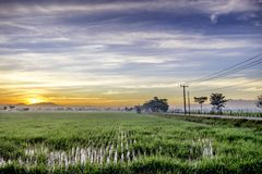 Very vast, broad, extensive, spacious rice field, streched into the horizon. Lonely tree in far away.  Beautiful cloud and red sky. And line of electricity Stock Photography