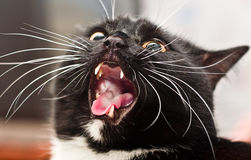 Very wicked cat Royalty Free Stock Photography