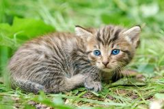 Very young kitten lying on the green grass stock photos