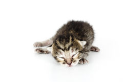 Very young kitten sleeping Royalty Free Stock Images