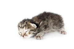 Very young kitten sleeping Stock Images