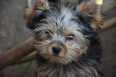Very young small dog in the garden royalty free stock photo