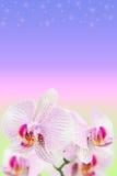 Verzacht bevlekte orchideeën op vage gradiënt stock fotografie