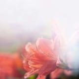 Verzacht vage bloemenachtergrond royalty-vrije stock afbeelding