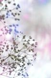 Verzacht witte gypsophils op een lichte pastelkleurachtergrond Stock Afbeeldingen
