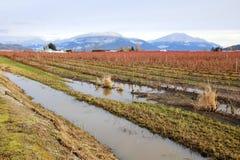 Verzadigd de Winter Landelijk Landschap Stock Afbeeldingen