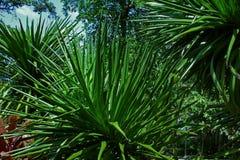 Verzadigd Groen van van achtergrond Sunny Tropical Leaves Sharp Bush Dichte Omhooggaande Wildernisbush stock foto's