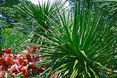 Verzadigd Groen van van achtergrond Sunny Tropical Leaves Sharp Bush Dichte Omhooggaande Wildernisbush stock afbeeldingen