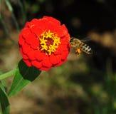 Verzamel honing Royalty-vrije Stock Afbeeldingen